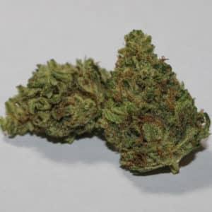 Buy 9 Pound Hammer Marijuana