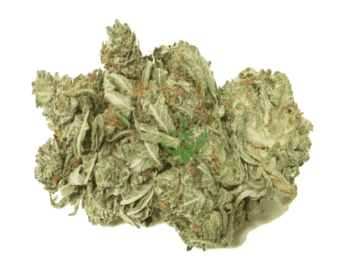 Buy Hybrid Cannabis Strains