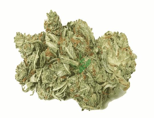 Buy Hybrid Cannabis Strains