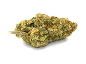 Buy Hempstar Marijuana