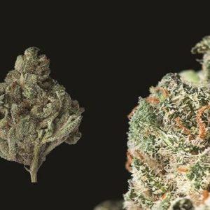 Buy Triple Diesel Marijuana