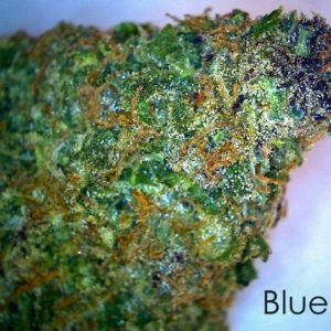 Buy Blueberry Marijuana