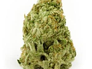 Buy Champagne Blue Dream Marijuana