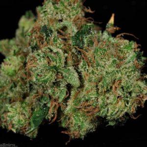 Buy Dutch Treat Marijuana