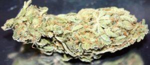 Buy Jean Guy Marijuana