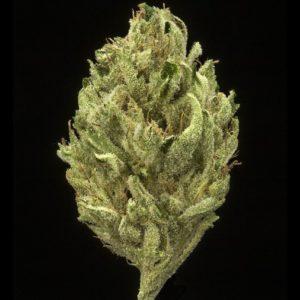 Buy Ghost Train Haze Marijuana