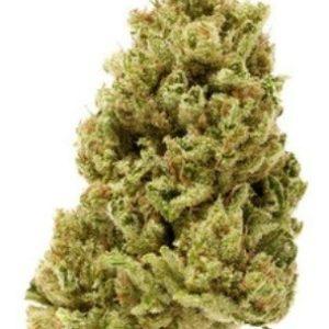 Buy Lodi Dodi Marijuana