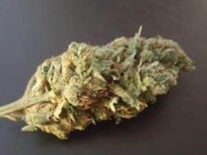 Buy Kosher Kush Marijuana