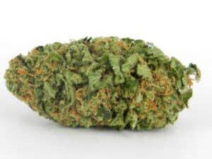 Buy Northern Lights Marijuana