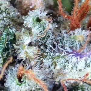 Buy Raskal OG Marijuana