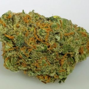 Buy Chocolope Marijuana