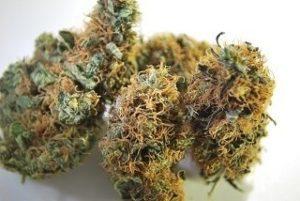 Buy Sour Tsunami Marijuana