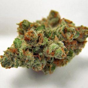 Buy XJ-13 Marijuana