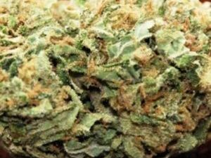 Buy Sour OG Marijuana